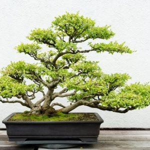 erina-medium-voyance